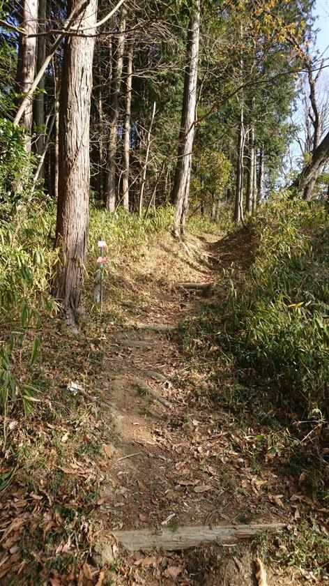 この道は「生駒縦走歩道」の一部で、多くの人が利用しているので歩きやすい