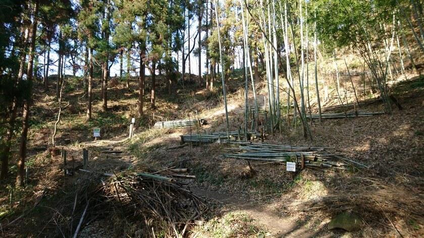 その後、竹が切られ整備された竹林にでる
