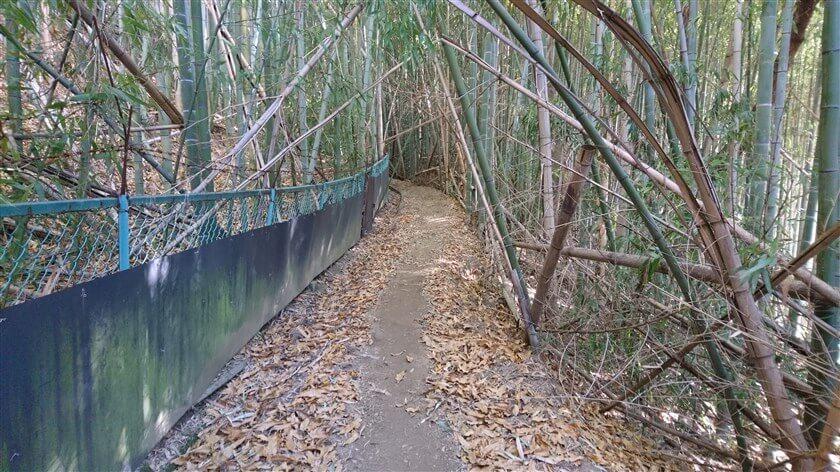 フェンスがある竹林が、しばらく続く