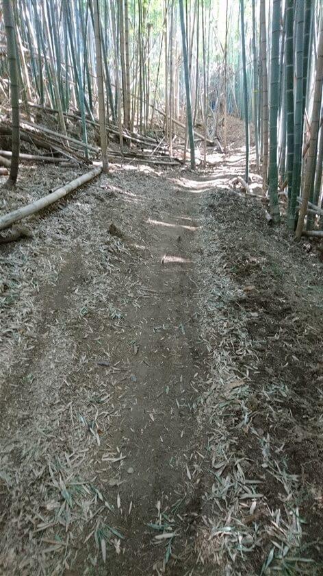 フェンスが途切れて、竹がまばらになってくる
