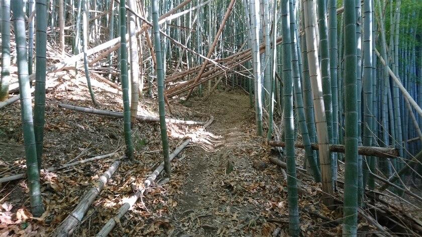 マウンテンバイクが通れるように、倒れた竹が辛うじて取り除かれたり、下が潜れるようになっている