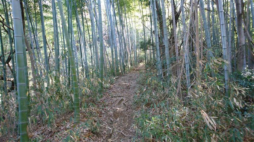竹が減り、笹が増えてくる