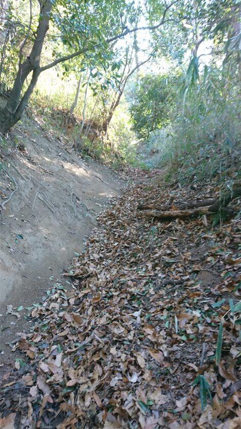 左がバンクになっており、マウンテンバイクは左を通過するのだろうが、歩く方は、落ち葉でふさふさで滑る