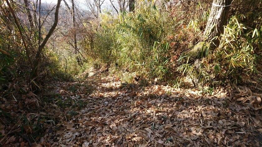 「白い紐」の木の下には、登ってくる道がある。ここが、バリルート(B&C)との合流地点。