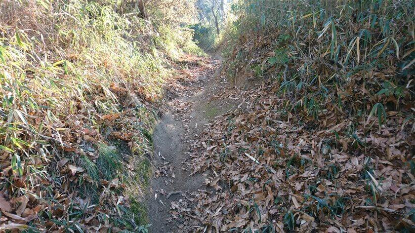 傾斜が緩い所はスピードが出ないからか落葉が残り、急な所は路面が見える