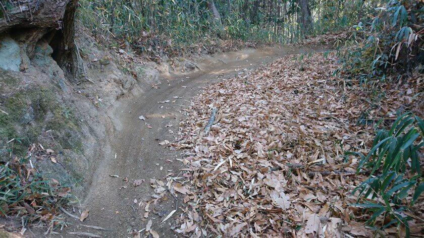 緩いカーブで、道も広い。ここなら、マウンテンバイクに遭遇しても避けれる。
