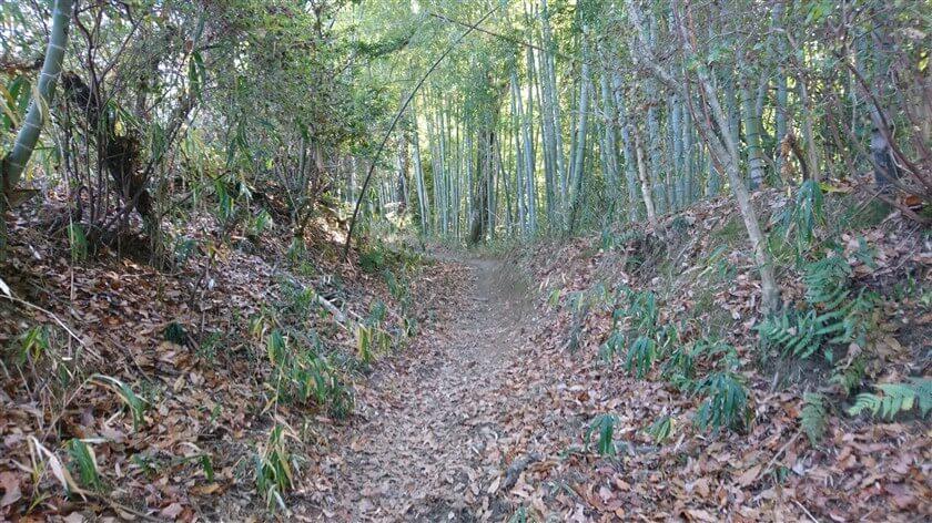 竹林への広い道になり、もうすぐ車道に出ると思うも・・・