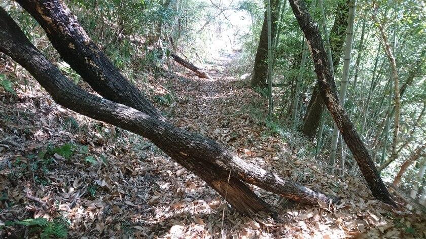 倒木もあるが、跨いで越えられる