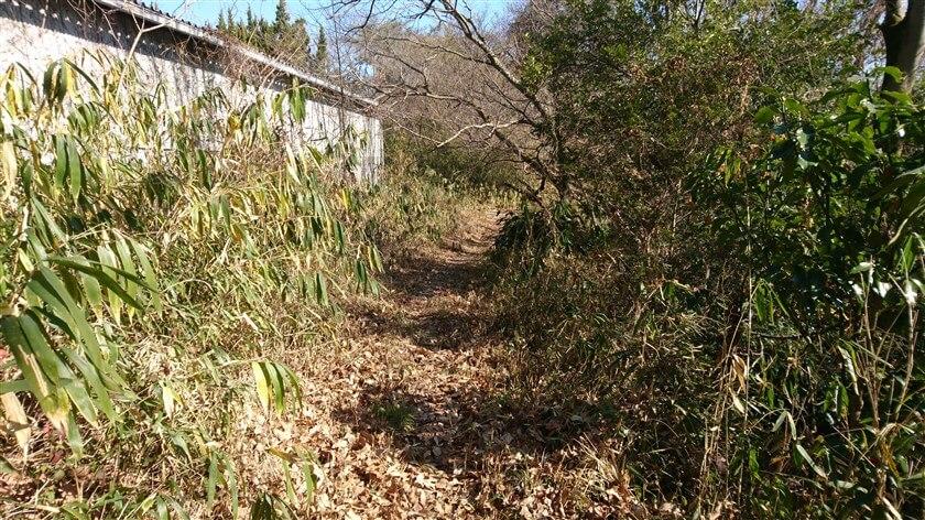 暫く行くと、倉庫のような建屋の裏に出る。この辺りで竹藪から抜ける