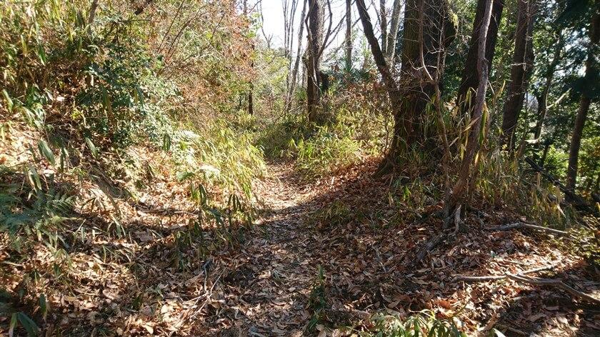 ここからは、歩きやすいハイキング道になる
