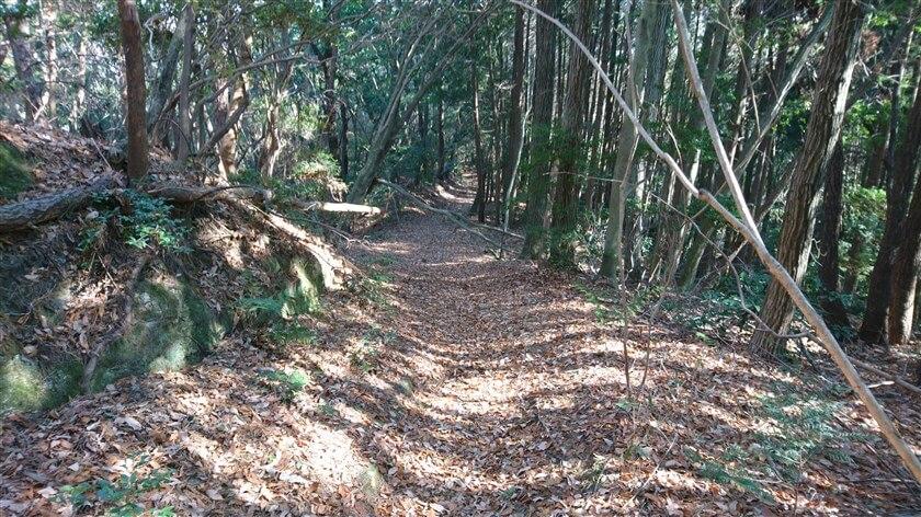 道が広くなり、杉林になる