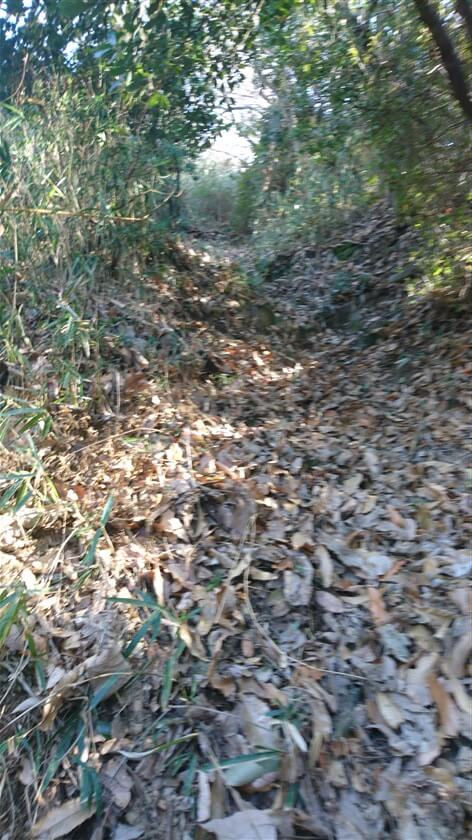 登り始めは落ち葉が重なった狭い道で、この先が不安になるが・・・