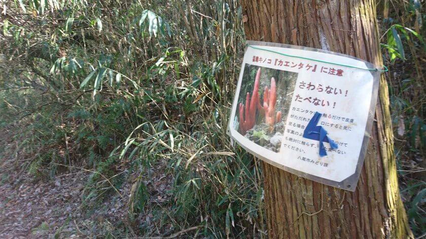 右の木に、注意書きが貼ってある