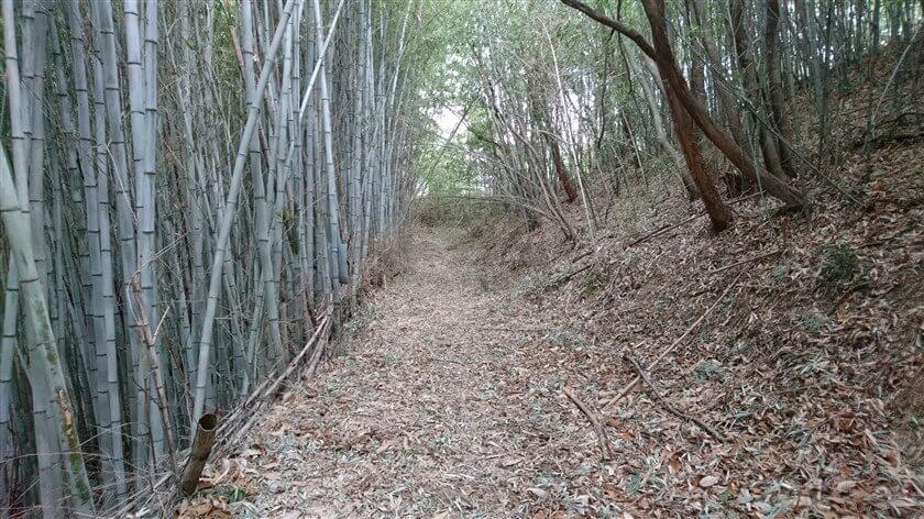 広い道が終わると、竹藪の道になる