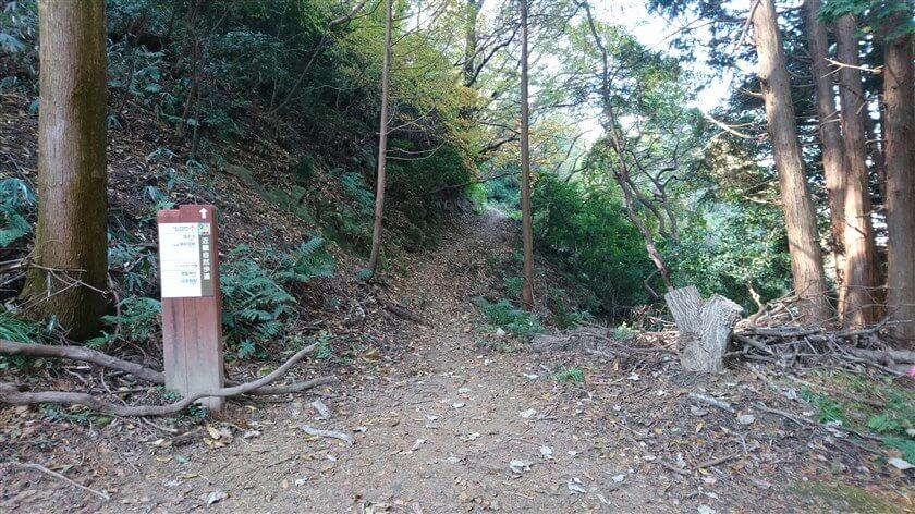 ここを右手に進むと、【市道大県信貴線】:通称「ぶどう坂」の車道に出て、JR高井田駅方面に向かう