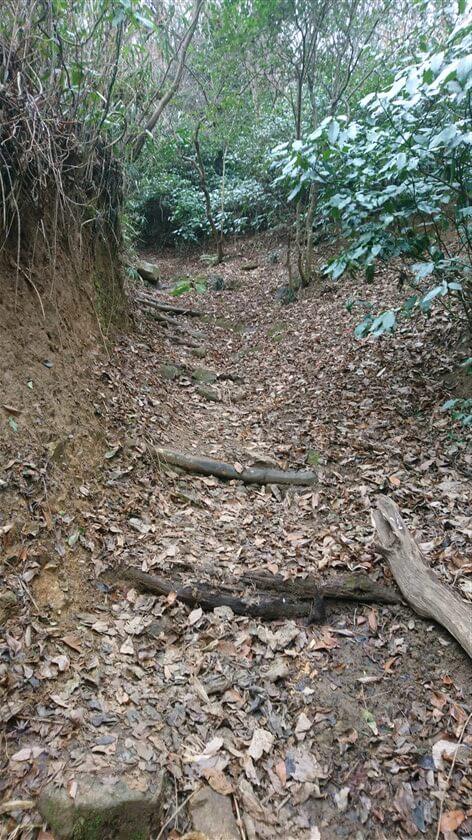 やがて傾斜がきつくなり、階段状に木の足場が作られている