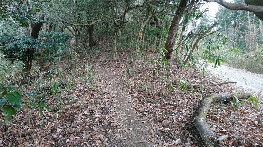 生駒縦走歩道に沿った、高安山山頂への道がある