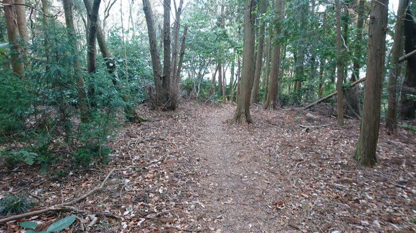 「← 高安城倉庫址」への道は、杉木立の中を行く