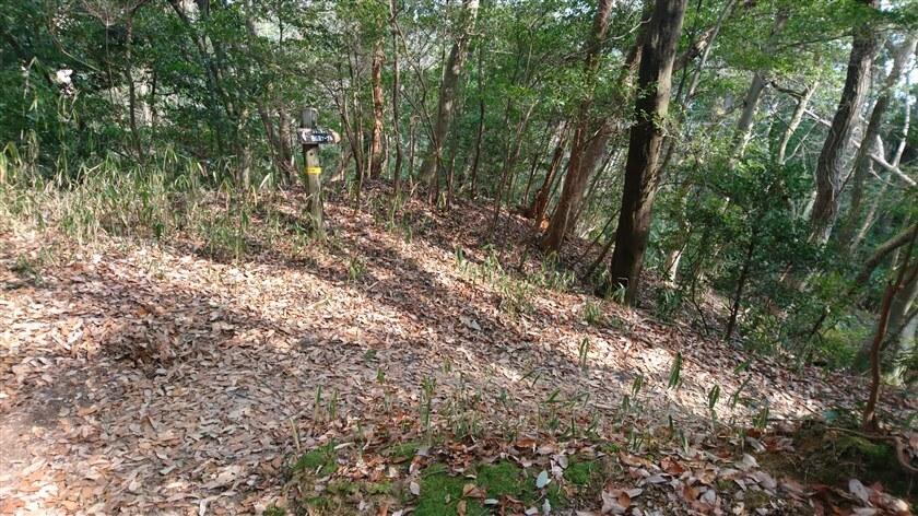 右下に降りるカーブの左脇に、「←高安山を経て西信貴ケーブル」の道標がある