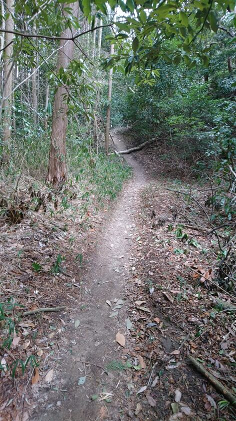 信貴山方面への道の様子。このルートで、初めて倒木に遭遇する