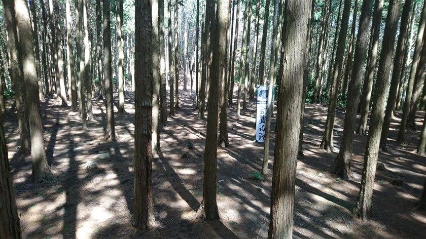 杉が林立しているが、平場(ひらば)=【「曲輪(くるわ)」「削平地(さくへいち)」】と判る松永屋敷跡