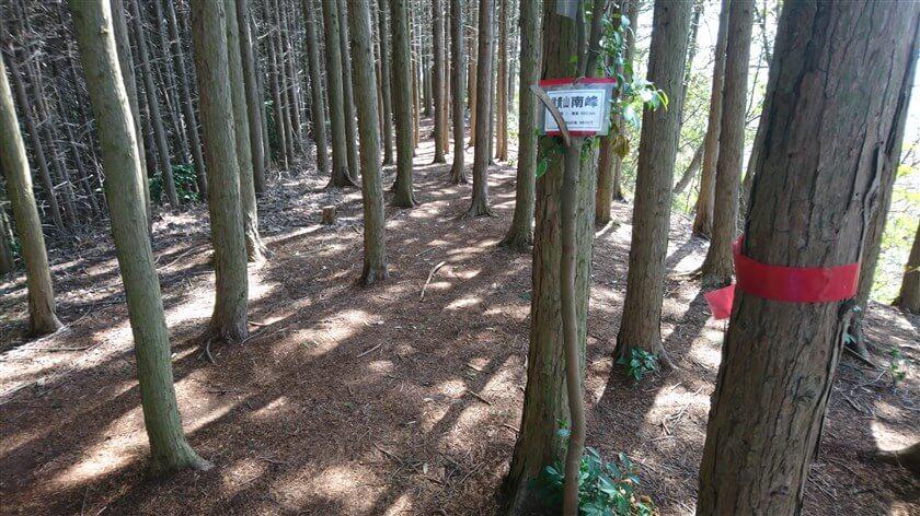 杉木立の尾根が広がっており、「信貴山 南峰 標高 400.5m」の標識が掛かっている