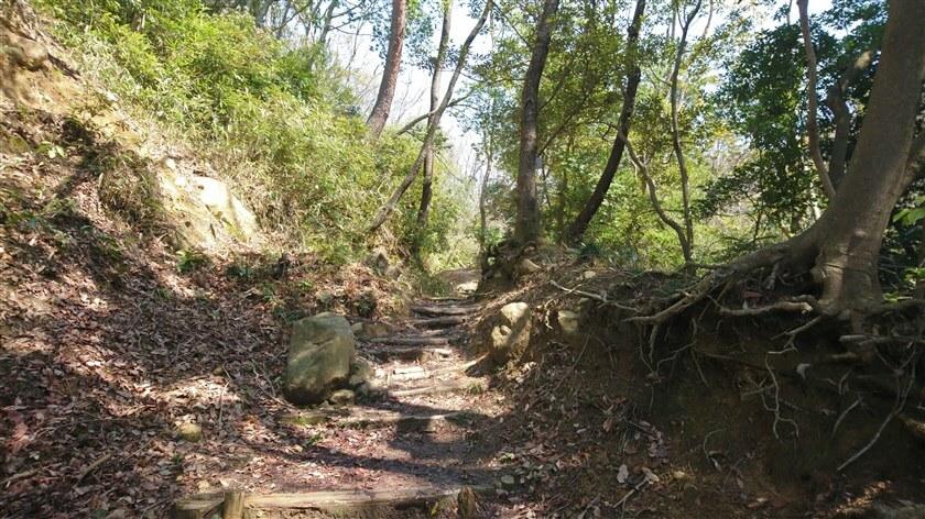 摂河泉展望コースは、このように全般に亘ってよく整備されており、手軽なハイキングコースである