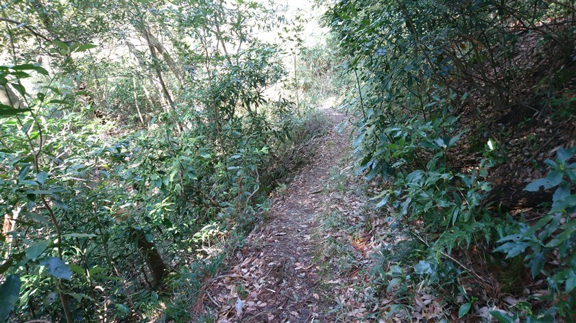 「府民の森 ぬかた園地」との下辺境界に沿って北上する