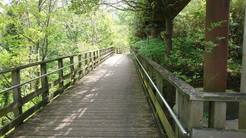 管理道を離れ、木道を行く。木道も緩やかな勾配で作られているので、長い。