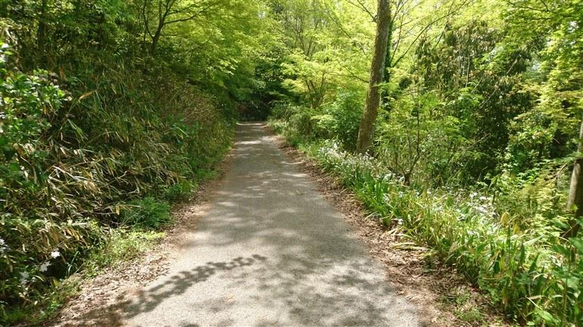 なるかわ園地休憩所に向かう道の様子