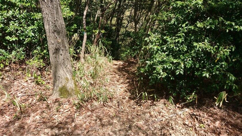 恩智峠に向かって進む道は、左に直角に左折すると「恩智テレメータ中継所」でる曲がり角がある。この曲がり角に「恩智峠」に出るショートカットへの入り口がある。