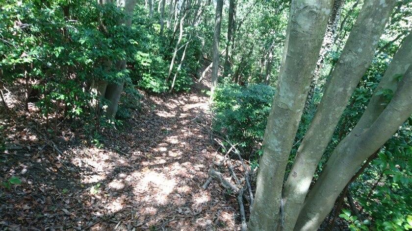 右側は、高安山霊園側に向かって急斜面になっている
