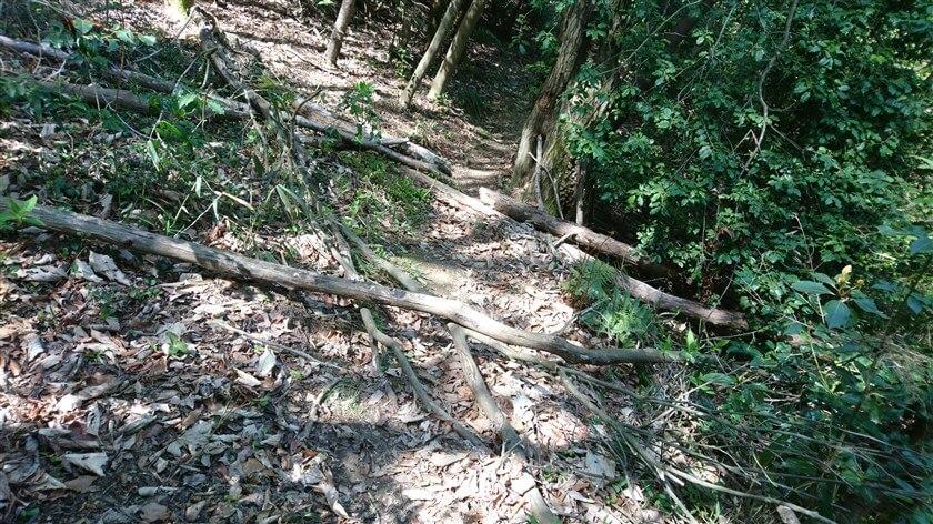 倒木が幾つも転がっている