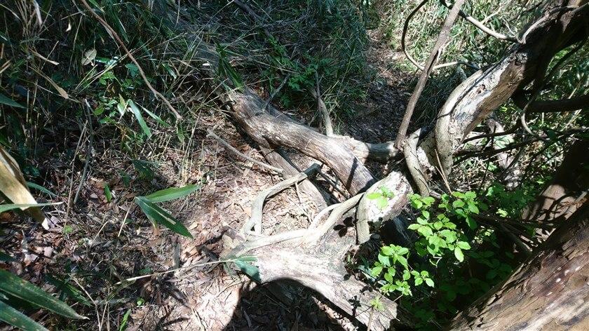 倒木を跨がねばならない個所がある