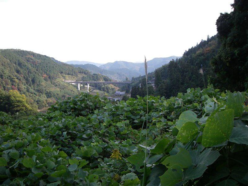 賀名生大橋(かなうおおはし)が見える