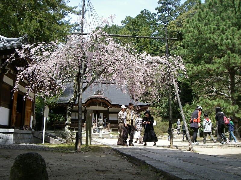 弘川寺の隅屋桜(すやざくら):2010.04.04
