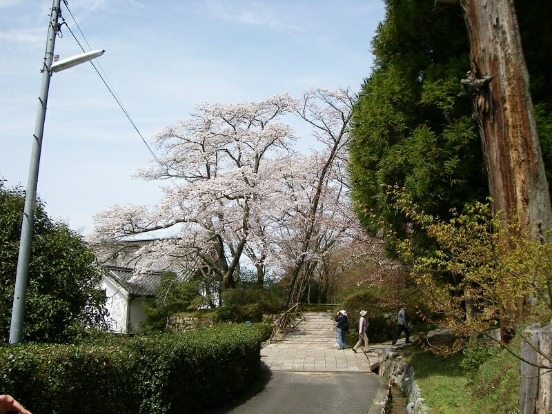 弘川寺の桜:2010.04.04