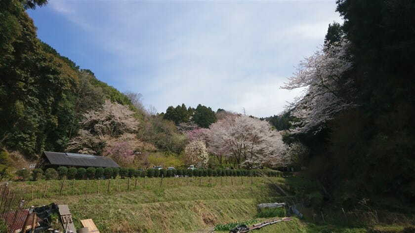 弘川寺の桜:2019.04.05