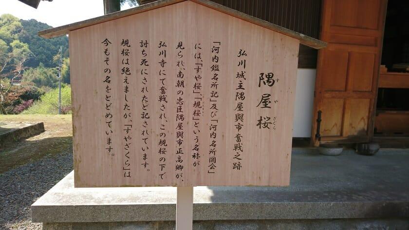 隅屋桜(すやざくら)