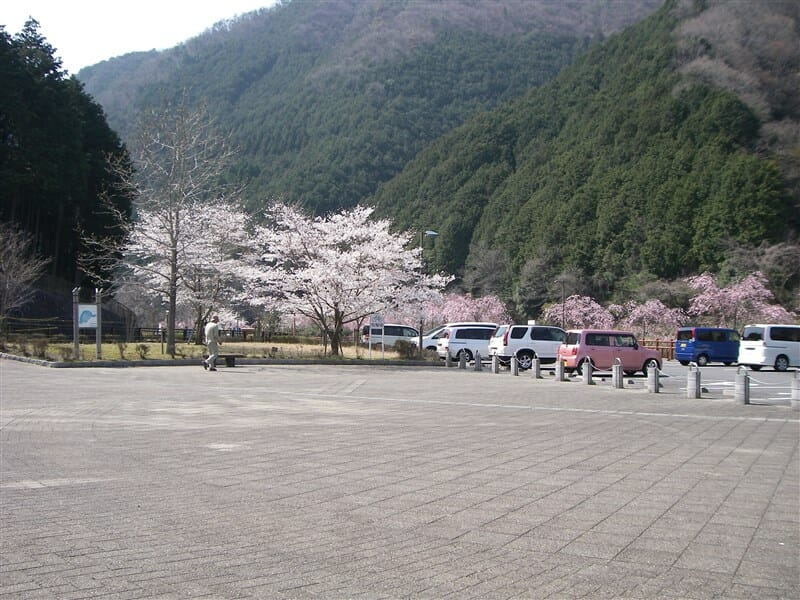 榛原内牧辺りの桜