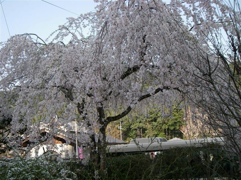 大野寺の境内