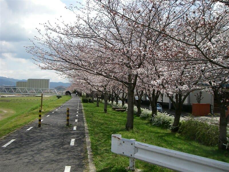 石川サイクル橋に向かう