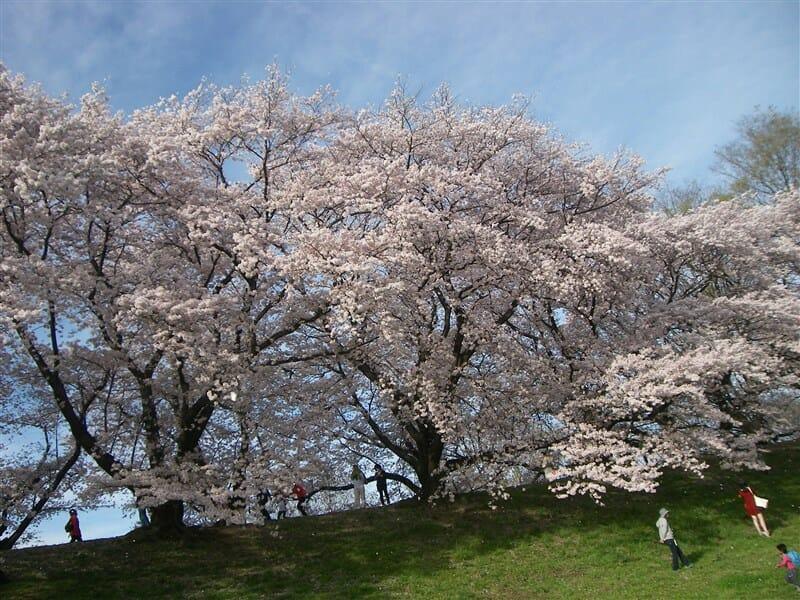 木津川側からの眺め