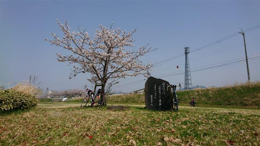 西行の歌碑の桜