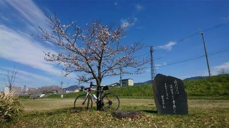 西行の歌碑と桜(石川サイクリングロード)