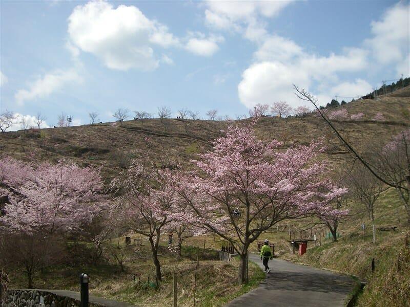 かんざき桜の山・桜華園