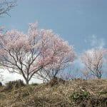 神河町 越知川名水街道巡りコースに桜を見に出かける