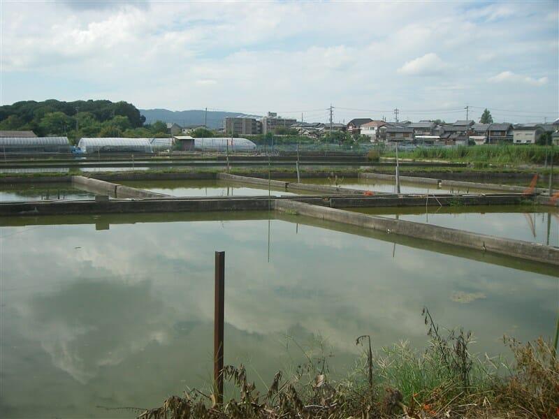 kouriyama31