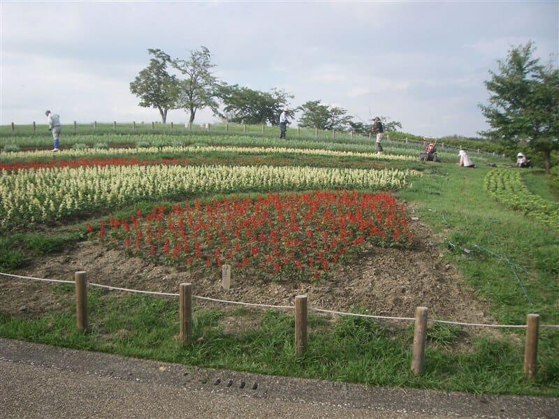 kouriyama41