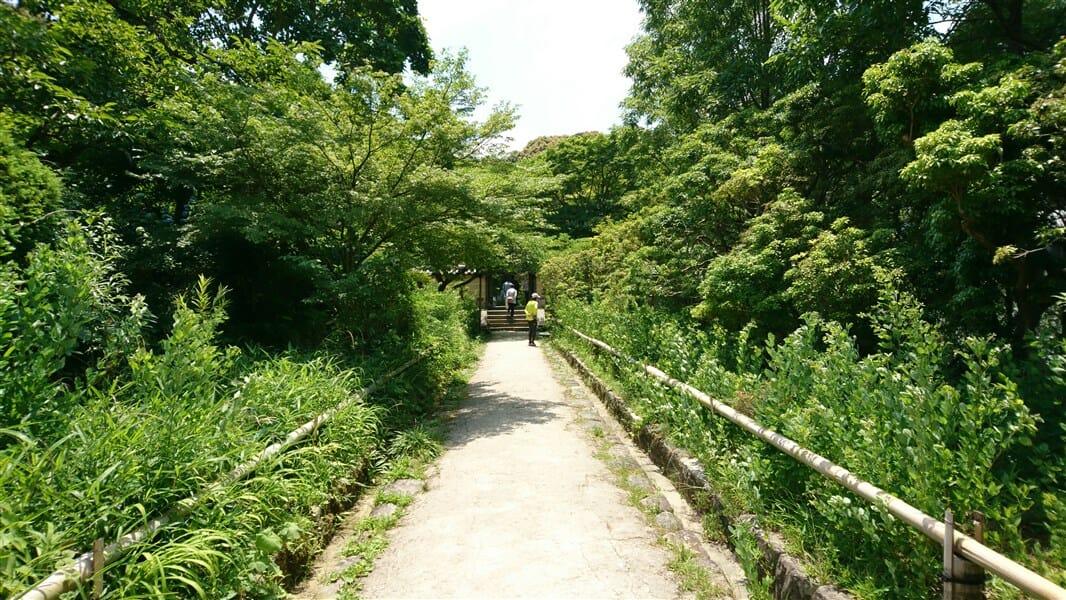 馬酔木(あしび)の参道